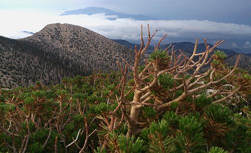 02d Mt Gorgonio
